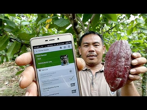 Making tech grow cacao sustainability