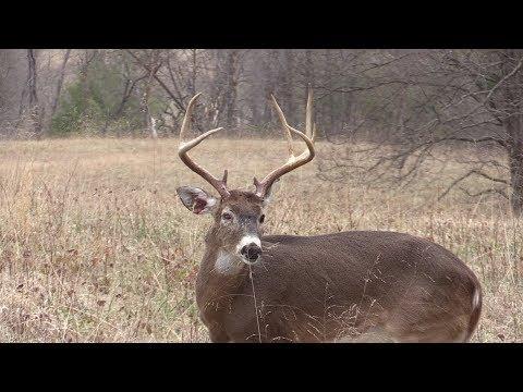 Big Bucks In Tennessee!