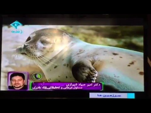 Project Save Caspian Seal