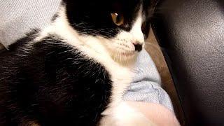 先住猫の呼びかけにドスの効いた声で返事する子猫 Cat meows in sweet voice but gets grumpy reply ドス顔 検索動画 13