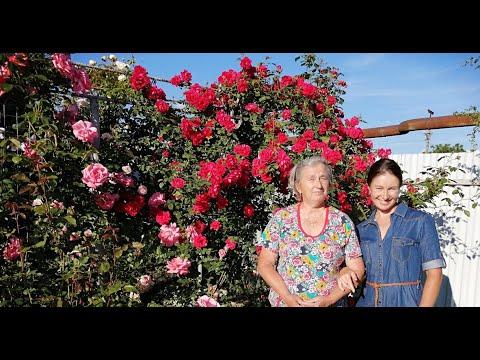 Розы у мамы. Апшеронский район, Краснодарский край