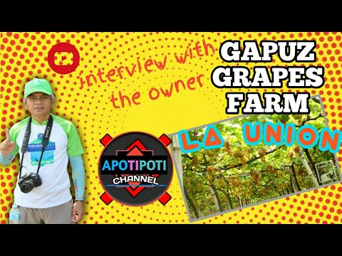GAPUZ GRAPES FARM I BAUANG LA UNION PHILIPPINES