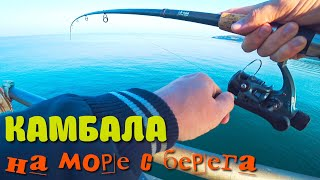 Морская рыбалка на камбалу с берега Наживка для ловли камбалы Балтийское море
