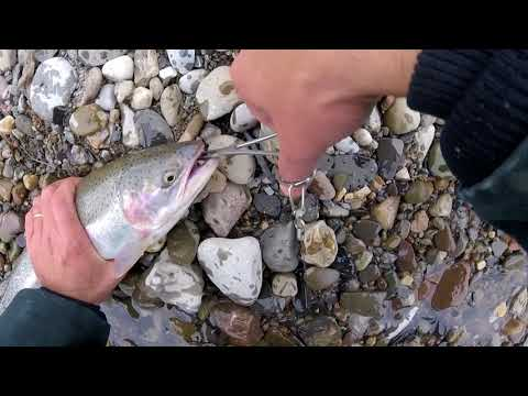 Buffalo Ny Steelhead Fishing 11 26 17