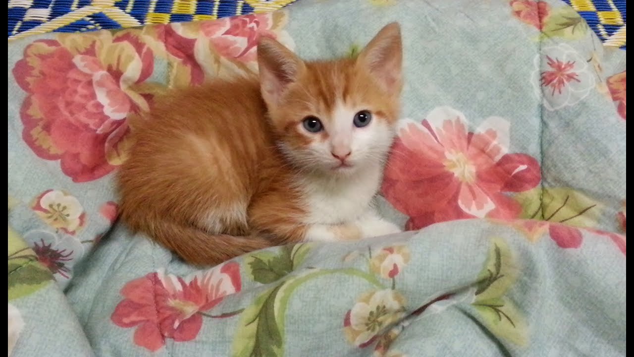 My New Baby Kitten~ - YouTube