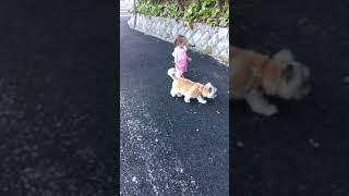 初めてのお散歩.