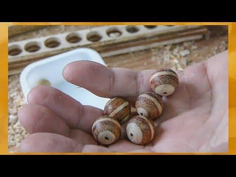 Как сделать красивые деревянные шарики для браслета