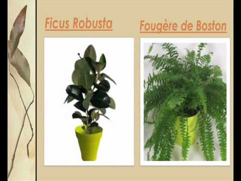 liste des plantes vertes d 39 int rieur youtube. Black Bedroom Furniture Sets. Home Design Ideas