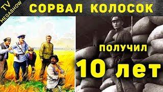 Самые абсурдные законы СССР, которые реально были