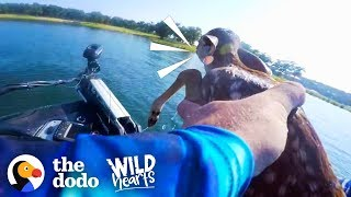 Guy Rescues Baby Deer From the Middle of a Lake | The Dodo Wild Hearts
