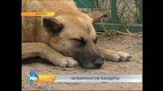 6-летнюю девочку собака покусала на детской площадке в Иркутске