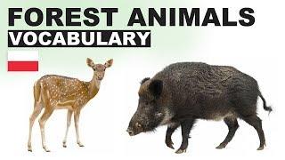 Angielskie słówka w obrazkach - Zwierzęta leśne 1 (Forest animals)