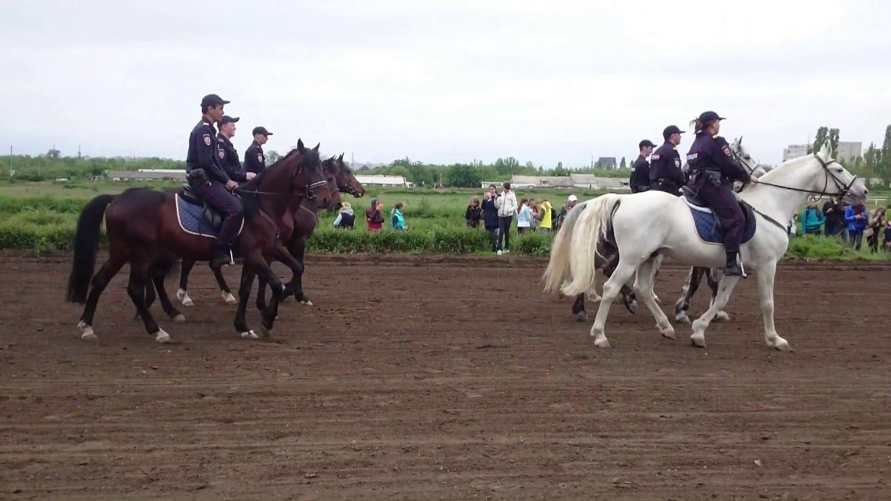 Терский племенной конный завод №169. Лучшая лошадь арабской породы .