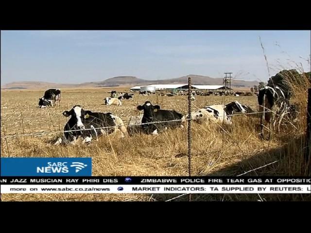 DA's Maimane visits Vrede dairy farm allegedly linked to Guptas #1