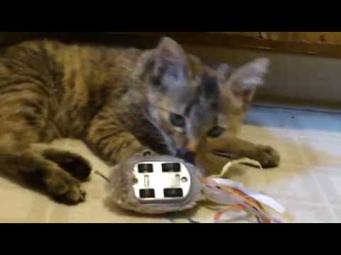 Kitten vs. Shade Pull Cord and Toy Mouse