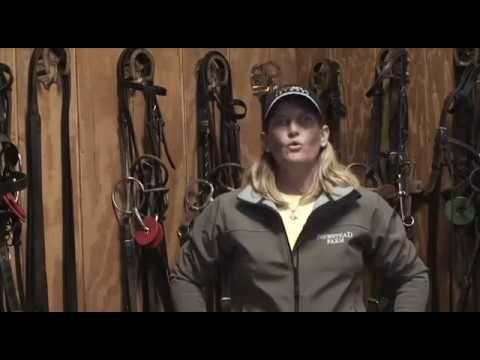 Equipment: Draw Reins, Or Straight Reins | Sylvia Firestone