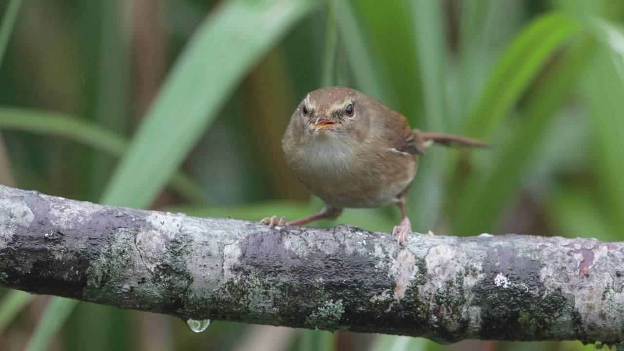 2016 台灣鳥攝圖集(完整版)