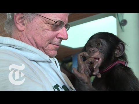Download Youtube: Animals Are Persons Too | Op-Docs | The New York Times