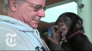 Animals Are Persons Too | Op-Docs | The New York Times