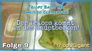 Der Triops kommt nun in das Hauptbecken! Folge #9 Triops Basis Set Galileo von Clementoni