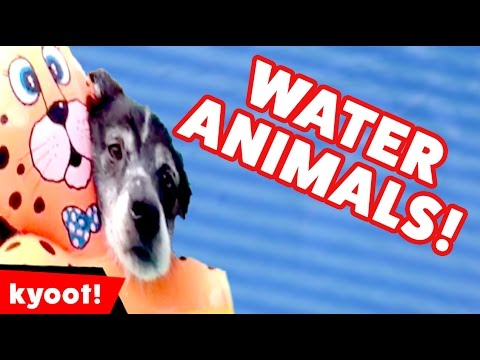 The Funniest Water Animal & Pet Videos of 2016 Weekly Compilation | Kyoot Animals