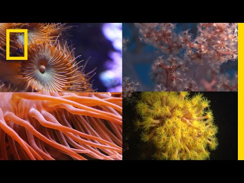 Thumbnail: Coral Reefs 101 | National Geographic