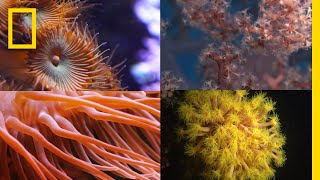 Coral Reefs 101 | National Geographic
