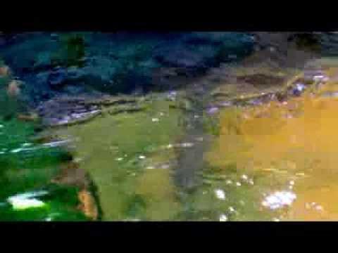 Buntes Wasser und Forellen