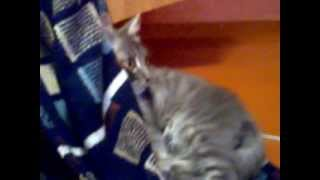 Кот смотрит ужасы(Техасская Резня Бензопилой. Начало)