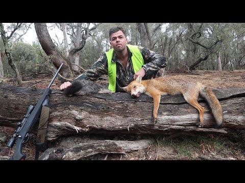 2020 NSW State Forest Hunting - Quest For A Deer Part 1