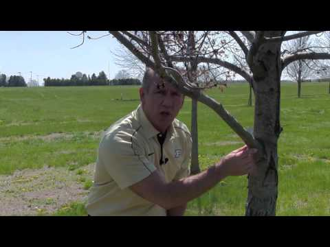 Tree Pruning Essentials, FNR-541-WV