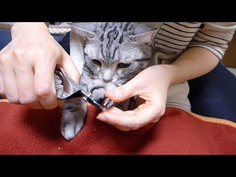 爪切りのときはお利口さんな猫 2