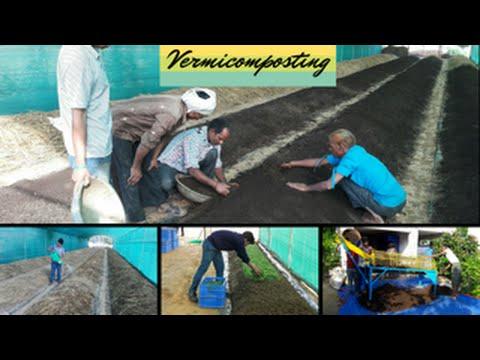 Vermicomposting: An Organic Startup