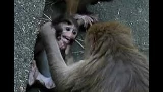 Poor baby monkey to be attacked