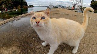 漁港で出会った野良猫をナデナデすると喜んでゴロンゴロン転がった