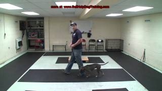 How To Train A Dog To Heel - Dog Training By K9-1.com