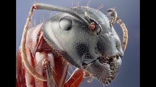 ТОП 7 САМЫХ крупных насекомых ПЛАНЕТЫ