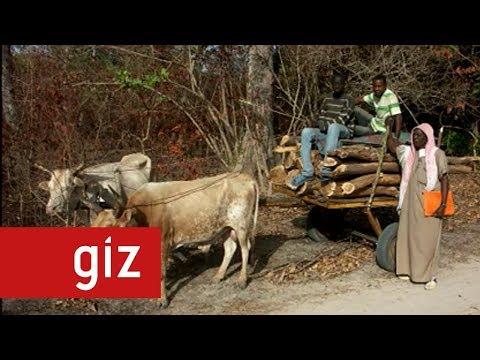 Le Bois-Énergie - La future énergie verte de l'Afrique