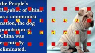 History Of The Chinese Shar-pei In America