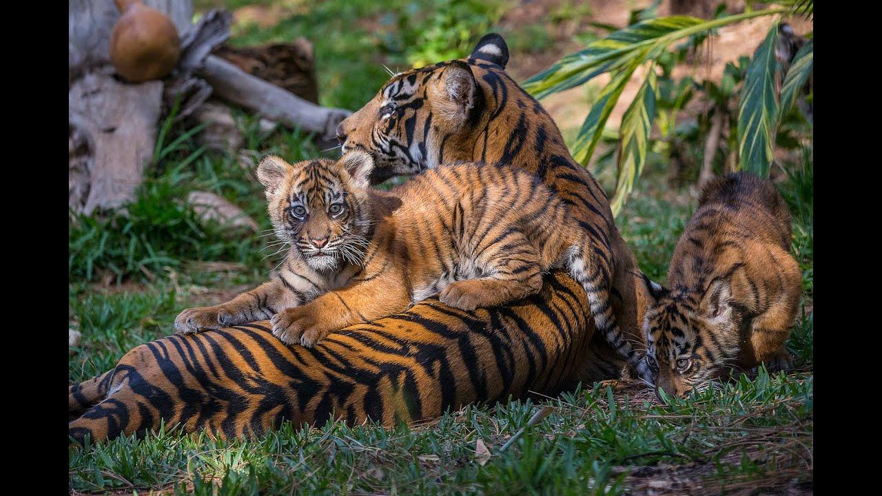 Endangered Suma...