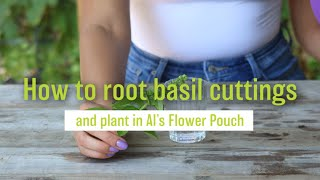 How to Root Basil Cuttings and Plant in Al's Flower Pouch