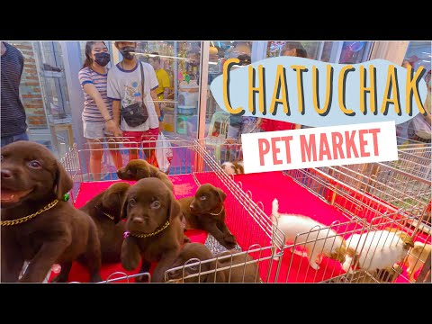 [4K] Chatuchak Pet Market (จตุจักร ตลาดปลา สัตว์เลี้ยง) Biggest Pet Market in Bangkok, Thailand 2020