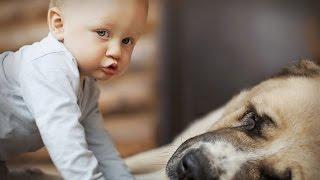 Маленькие дети и животные   милая подборка лучших моментов