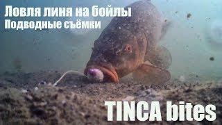 Рыбалка на линя. Ловля линя на бойлы. Подводные съёмки + поклёвки вживую! Waterwolf