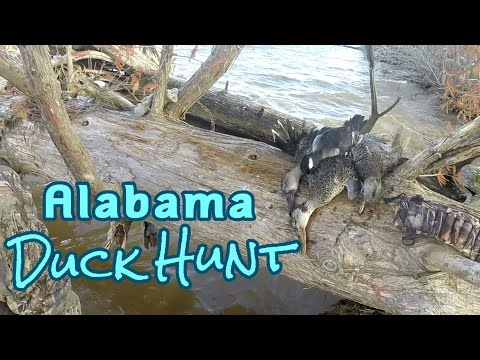 Public Land Alabama Duck Hunt