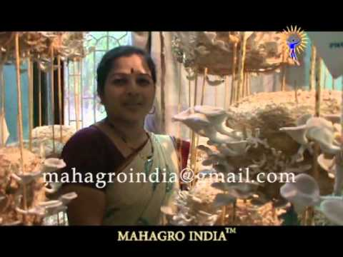 MAHAGRO INDIA, Oyster Mushroom Cultivation Success Story. 0993036