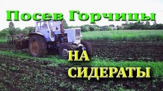 Рекомендации по посеву горчицы как сидерата для удобрения почвы