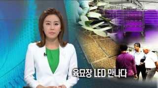 [광주MBC뉴스] 육묘장 LED를 만나다