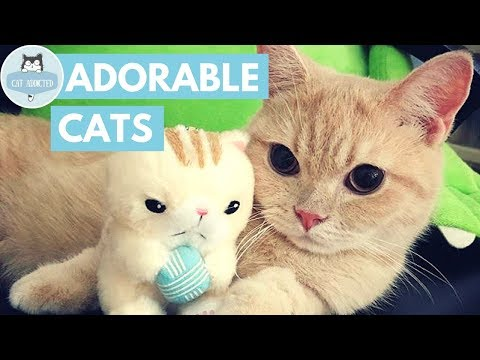 Cute Cats And Kittens #21 ✔