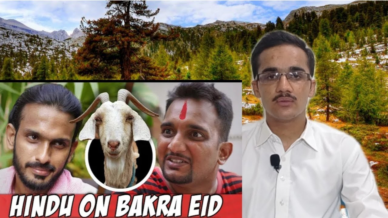 Download Muslim Reaction On Hindu on Bakra Eid - Sajid Ali   True Thoughts   Blend R & R  